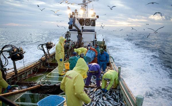 『日本の漁業』 平均所得200万円、平均年齢60歳超…漁業従事者20万人割る