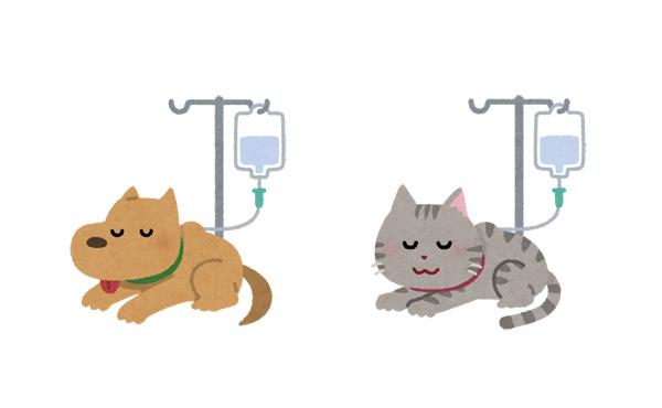 獣医師「ペットの手術は保険なしで最低10万はいります。ポンと出せない貧乏な人は飼わないで」→炎上