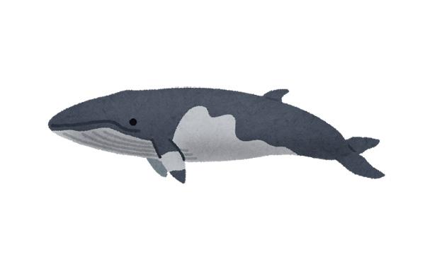 クジラ肉はレンガ大の大きさで300円だったからな。貧乏人の友さ。