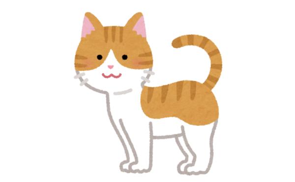 ウチの猫38万円wwwwwwww
