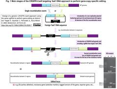 generic CRISPR-Cas9