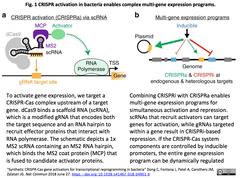 CRISPRa for E.coli