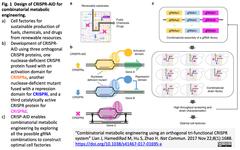 CRISPR-AID