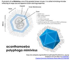 Mimivirus