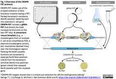 CRISPR-FRT 1