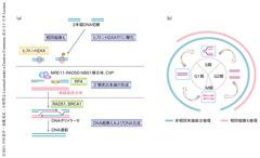 Komatsu-Molecular-Cell-11.3.3-Fig.1