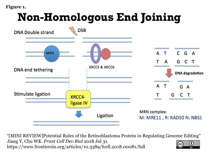crisp_bio  DSBからの修復経路の選択に影響を与える因子とCRISPRa/iによる調節 (2件)コメント