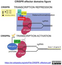 CRISPRi:a