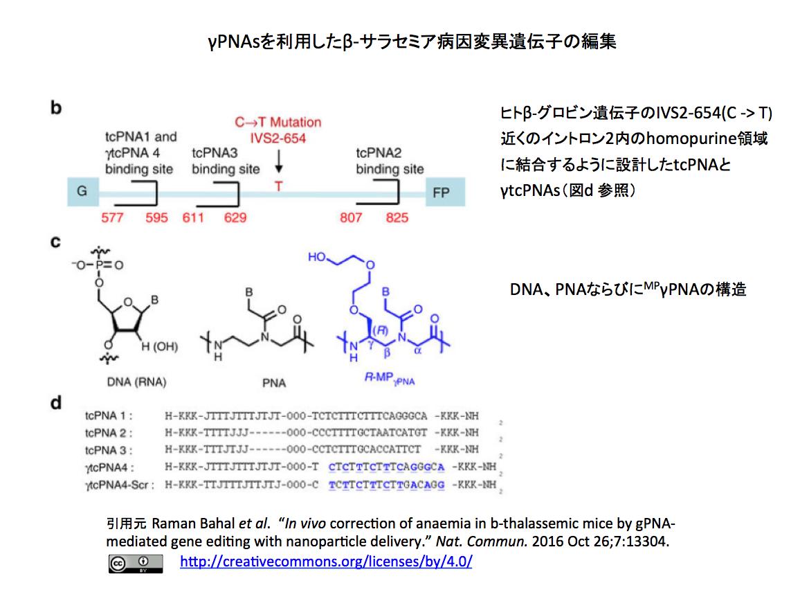 ペプチド核酸に依るβ-サラセミア...