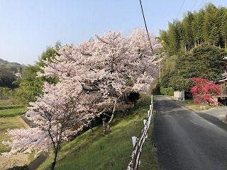 写真 2018-04-01 8 04 51