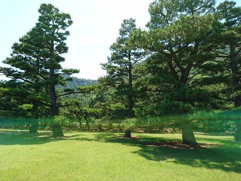 栗林公園の松1