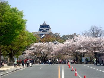 sakura-kumamoto