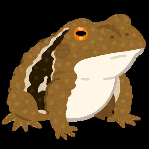frog_hikigaeru