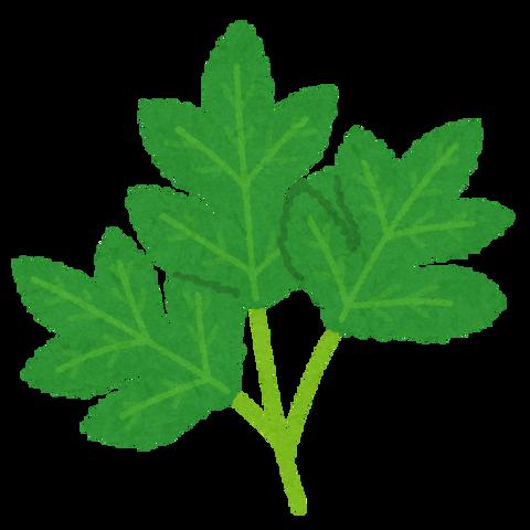 plant_ashitaba