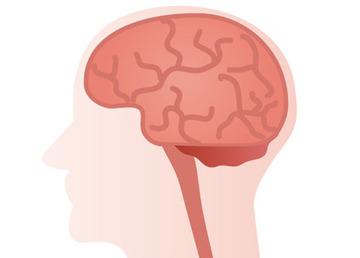 脳01 - コピー