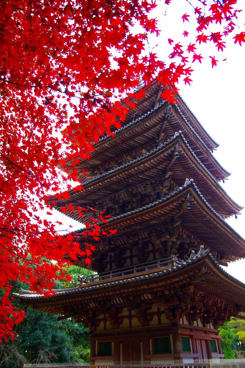 Crux's Stardust Diary  京都・醍醐寺弁天堂の紅葉が鮮やかすぎるコメントトラックバック