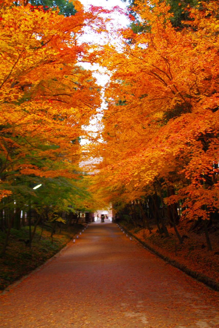 Crux's Stardust Diary2012年11月29日京都・醍醐寺弁天堂の紅葉が鮮やかすぎる
