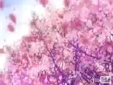 CLANNAD sakura