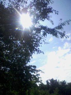 青空1:木漏れ陽
