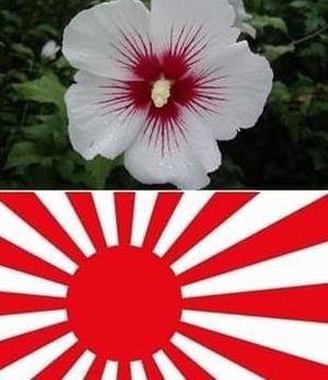 【悲報】韓国の国花ムクゲが親日
