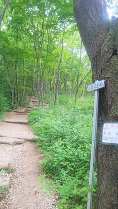 水沢山登山道4