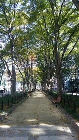杜の都とはこのことです。定禅寺通り。