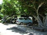 石垣島・木と車。