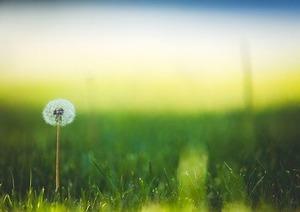 bloom-1851461__340