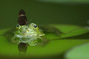 frog-540812__340