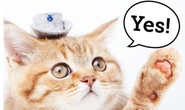 猫 Yes