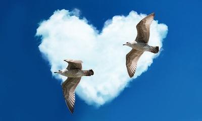 gulls-1370979_640