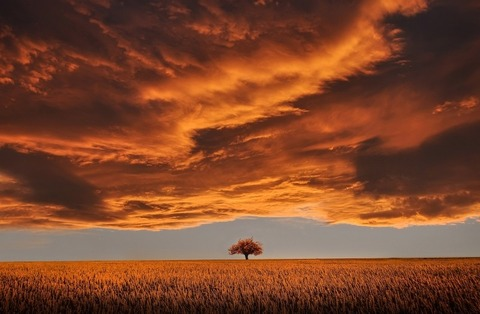 tree-in-meadow-under-dramatic-sky-at-sunset[1]