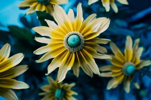 petal-flora-flower[1]