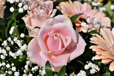 rose-4062295_1280