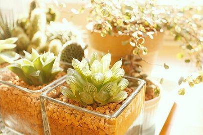 AXIS93_gardens500-thumb-900x600-4544