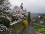 070331桜 秋月 川と桜