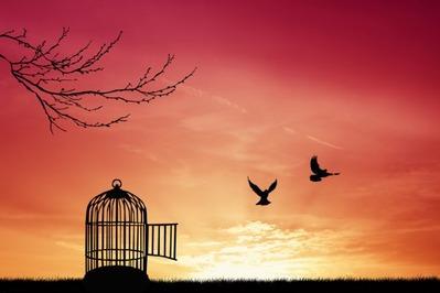 depositphotos_29460297-stock-photo-bird-cage