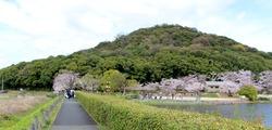 春爛漫 桜の季節