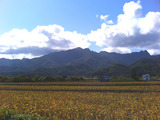 芦別岳全景