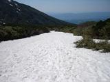 かみふらの岳登山道の雪渓