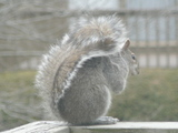 cold day's squirrel