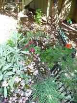 garden_before