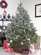 tree tate