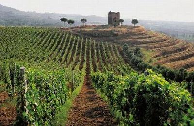 16585342_frascati-tra-vigneti-ville-due-passi-da-roma-0