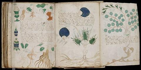 800px-Voynich_Manuscript_(164)
