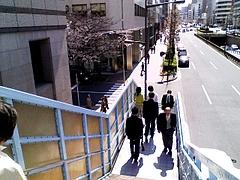 歩道橋からさくら通りへ