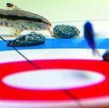魚カーリング