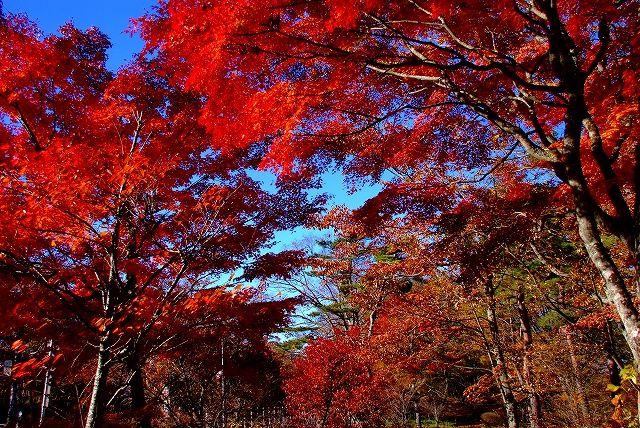 山中湖紅葉画像1