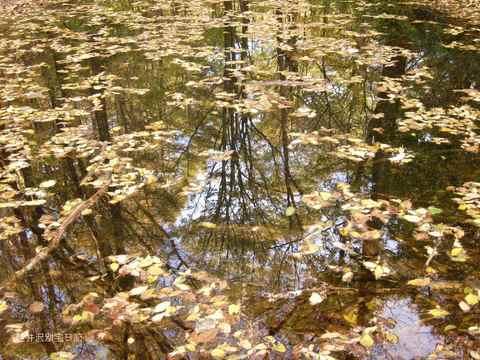 野鳥の森の池