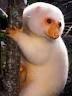 動物cuscus